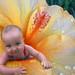 flowerchild 2