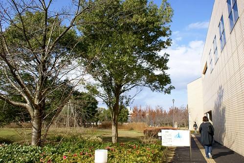 新潟県立図書館のフクロウ