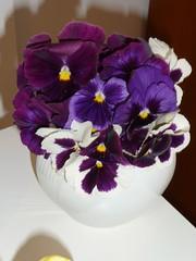 Pensamientos (*ValePumares*) Tags: flores colores lila violeta pensamientos florero