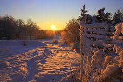 quarta sunset 9 (maj-lis) Tags: winter sunset snow vinter sweden explore sverige sn wondersofwinter bohusln solnedgng vstkusten orust bstkusten henn goldenmix mallmixstaraward whatyouseeiswhatyouare quartasunset