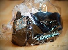 I am a present! (Sybren A. Stüvel) Tags: wood black cat wrapping kat floor gift present zwart poes hout vloer cadeau cellophane muesli kado cadeautje kadootje cellofaan lens:type=85mmf18usm p52:theme=you