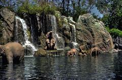 Disney's Jungle Cruise 1978 on film & HDR (hz536n/George Thomas) Tags: summer sky elephant film bath florida ae1 january disney scan disneyworld 1978 kodachrome canonae1 hdr junglecruise 2010 smrgsbord cs3 photomatix dimagescandualiv flilm hz536n