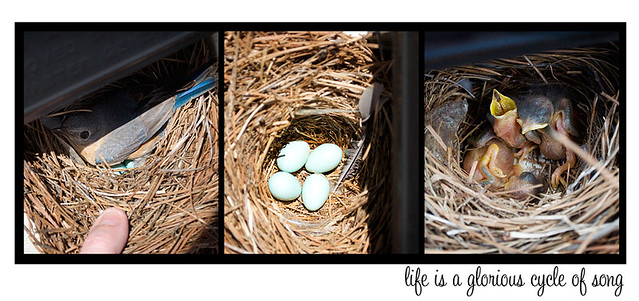 blubird-collage