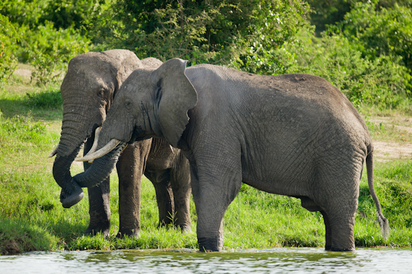 RYALE_Rwanda_Uganda_Safari-235