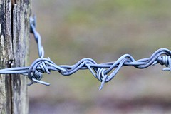 tied off (AngharadW) Tags: intertwined metal depthoffield wales countryside cefngwlad cymru angharadw dof fencedfriday fence friday barbed wire barbedwire