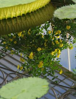 D15799.  Kew Gardens.