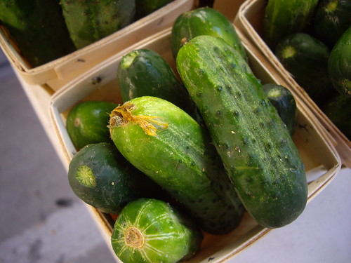 Pickling Cukes from Rhoads Farms