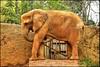 Elephant (Vinicius Portelinha) Tags: brazil elephant animal brasil zoo nikon sãopaulo sampa sp coolpix bicho hdr p90 elefante zoológicodesãopaulo paquiderme zoógico