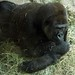 Woodland Park Zoo Seattle 022