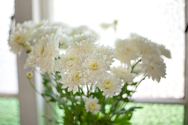 Flowers! 7/365