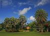 Florida blues and greens (iCamPix.Net) Tags: vacation canon landscape florida miami lakes familyfun professionalphotographer exoticplants fairchildtropicalgarden 7931 markiii1ds
