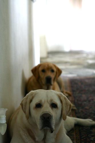Dylan & Gus