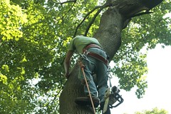_MG_6345.JPG (zimbablade) Tags: trees sleepyhollow dougmiller videopoem