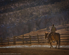On a horse in old cowboy boots (Dave Arnold Photo) Tags: co colorado horse us usa farm ranch equine cowboy cowboyboots feco fence mountains larimercounty larimer bigthompsoncanyon western west rockies rockymountains pic picture photo photograph image davearnold davearnoldphoto davearnoldphotocom peopleenjoyingnature colo darnold oldcowboyboots cowgirl boots rural fenceline arnold oldwest westernus old cowboyhat hat oldcowboyhat