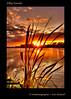 Silky Sunset (Irishphotographer) Tags: ireland sunset lake water sunrise reeds shoreline shore co tranquil armagh peacefull kinkade silkysunset beautifulireland irishphotographer imagesofireland kimshatwell breathtakingphotosofnature beautifulirelandcalander wwwdoublevisionimageswebscom