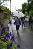 Japan Suburban Street In Rain With Flowers (aeschylus18917) Tags: flowers flower nature rain japan umbrella season 50mm nikon waterdrop seasons bokeh d f14 raindrops 日本 nikkor 花 bluebell raindrop pxt rainyseason waterdroplet bellflower nikkor50mmf14d 50mmf14d 梅雨 tsuyu 季節 50mm14d d700 ダニエル baiu danielruyle aeschylus18917 danruyle druyle ルール ダニエルルール
