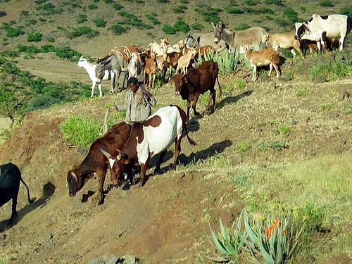 Near Lalibela, Ethiopia