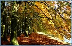 28okt09: Rogmanspark Almelo, herfst..... (guus timpers) Tags: water herfst herfstkleuren vijver eenden beuken beuk almelo gravenallee rogmanspark beukenlaan herfsttinten geengroenbruin