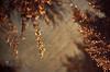 The 10th Rule Of Light Club is... (SonOfJordan) Tags: winter light shadow sky blur colour tree texture nature water rain backlight night canon dark eos droplets warm mood branch bokeh amman jordan backlit shimmering xsi featured عمان 450d adidap الاردن lightclub samawi sonofjordan shadisamawi المملكةالاردنيةالهاشمية wwwshadisamawicom