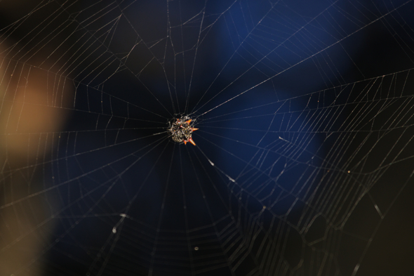 111109_spider_02