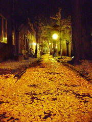 Paved with gold (moocatmoocat) Tags: street autumn philadelphia leaves yellow night gold evening alley little ginko washwest