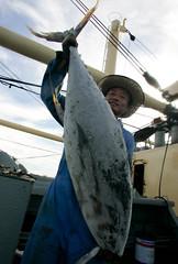 釣起鮪魚的漁民。照片提供:綠色和平