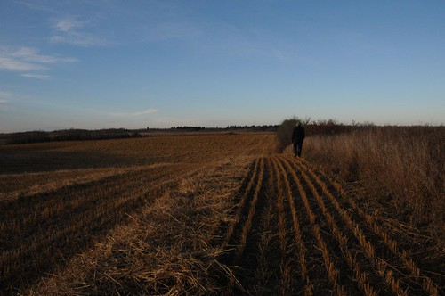 Walking the North property line looking West