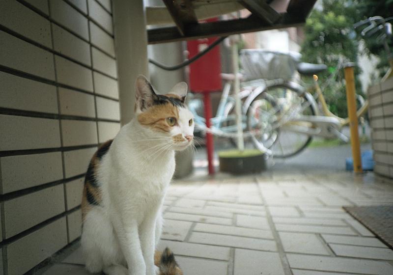 ビル脇の猫