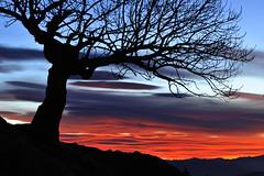 (jonlp) Tags: landscape dawn navarre navarra nafarroa egunsentia aralar paisajea