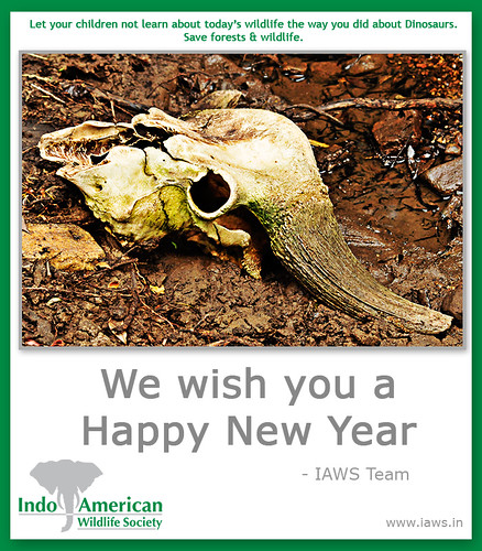 iaws-2010-new-year-wishes-2