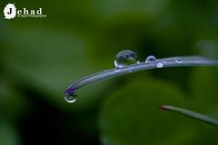 Macro - Drop