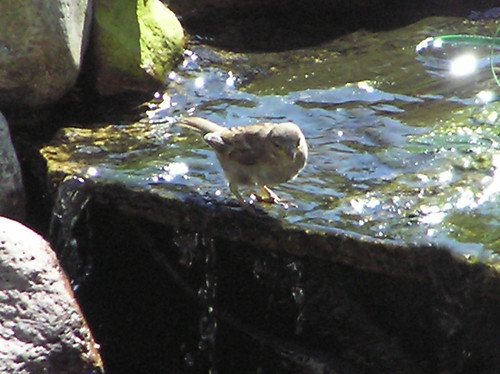 Bird on Waterfall