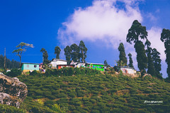 #backpacking #eastindia #explore #travel #yourshot #wanderlust #passionpassport #natgeographic #OurPlanetDaily #bbctravel #cnntravel #green #Himalaya #Mountains #India #Kurseong #Sky #TeaEstate #Tree #WestBengal (rammahajan7) Tags: backpacking eastindia explore travel yourshot wanderlust passionpassport natgeographic ourplanetdaily bbctravel cnntravel green himalaya mountains india kurseong sky teaestate tree westbengal