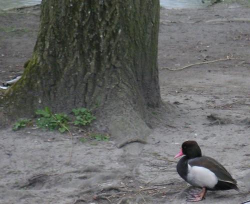 small-art-ducko