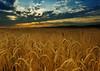 (Slavin@) Tags: light sunset sky sunlight nature field landscape summertime blueribbonwinner supershot bej mywinners abigfave platinumphoto anawesomeshot impressedbeauty flickrdiamond theunforgettablepictures nikonflickrawardgold goldendiamondblog