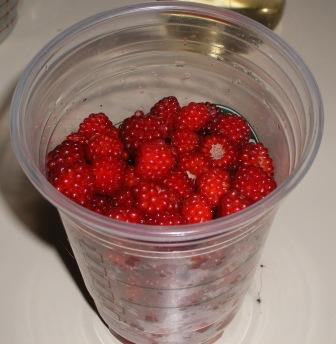 Wild Raspberries Picking Container aka Starbucks Iced Coffee Cup
