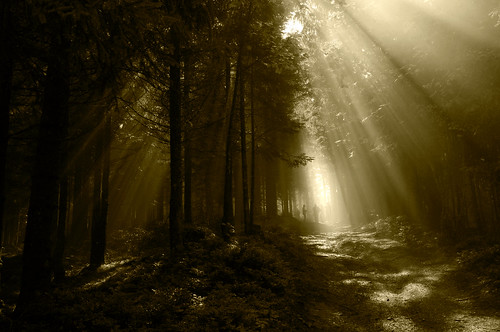 フリー画像| 自然風景| 森林/山林| 樹木の風景| 太陽光線| セピア| オーストリア風景|     フリー素材|