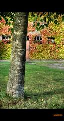 fDSC_9088_89_90_tonemapped (nadassfoto) Tags: orange white black color automne rouge nikon noir noiretblanc champs vert nb bleu route 24 28 nikkor mur 70 lorraine campagne blanc couleur orage d3 lierre moselle meurthe