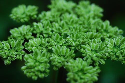 SS38_Green_Flower[2009]