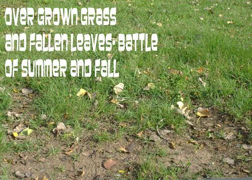 overgrowngrass