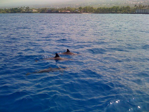 Dolphin Hawaii