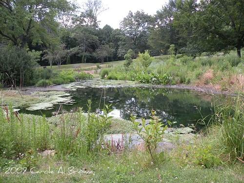 Municipal Rain Garden