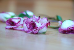 ,   ' (Unique'Queen) Tags: pink roses rose purple