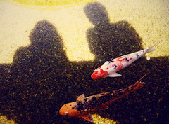 if we were fish (boygirlparty) Tags: california shadow fish couple sandiego pair koi balboapark