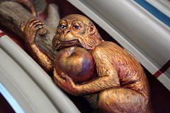 Darwin Monkey