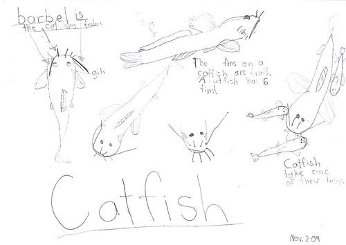 catfish nature journal