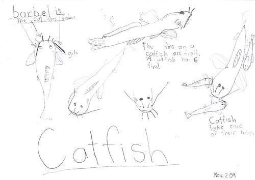 catfish nature journal