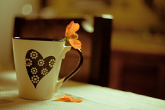 Lovely morning (Ale Marques Fotografia) Tags: flower canon eos flor 1d caneca canoneos1d ampresetspukie