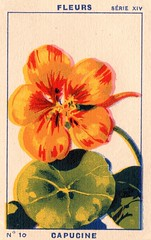 milliat fleurs010