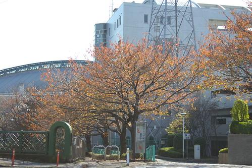 町田樹 画像38